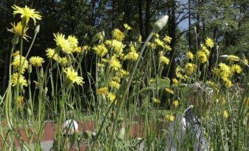 VIDEO: Maitsvad juurikad, mida tasub kindlapeale kasvatada. Lase neil ka õitseda!