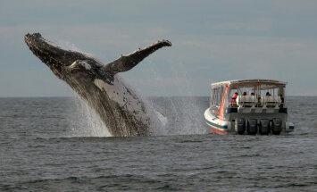 ФОТО: Неожиданная встреча с горбатыми китами в Тихом океане