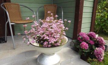 Vanad pesukausid saab sättida lillealuseks.