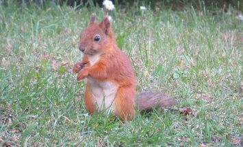 FOTOD: Oravad käivad sihvkadega maiustamas