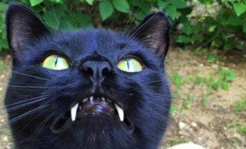 FOTOD: Vampiiri kihvadega kass, kes võitis omaniku südame esimesest hetkest