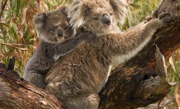 Uskumatu! Loomad, keda peetakse rahulikeks ja armsateks, võivad tegelikult olla üllatavalt agressiivsed