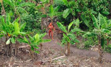 """""""Последний из племени"""": В Бразилии обнаружен человек, который 22 года живет один в джунглях"""