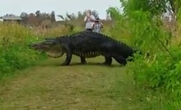 VIDEO: Kes ütles, et dinosaurused on välja surnud? Vaata, milline gigantne loom videosse püüti!