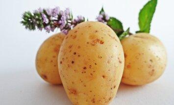 Kodumaine kartul on kasulikest ainetest pungil
