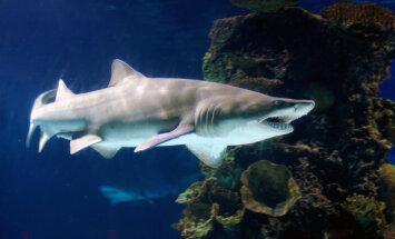 В Таиланде закрыли знаменитый пляж после нападения акулы на туриста