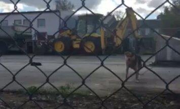 Šokeeritud lugeja VIDEO: Rakvere laoplatsile on jäetud ebainimlikes tingimustes ketikoer koos jõuetu kutsikaga