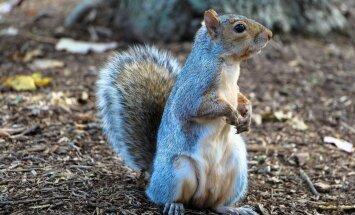 Märka väikseid loomi: oravapojad ja vigastatud siilid tahavad abi