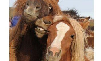 PÄEVAPILT: Lustlik hobuse selfie