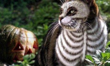 FOTOD: Kas oled halloweeniks valmis? 9 silmapaistvat ja humoorikat kostüümi oma lemmikule