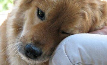 7 asja, mida hea peremees oma koerale ei tee