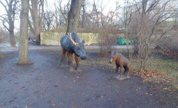 ФОТО читателя Delfi: В таллиннском парке появились новые обитатели