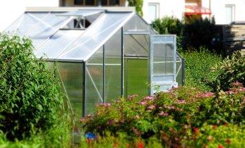 Kasvuhoone asukoha valikust sõltub saagikus.