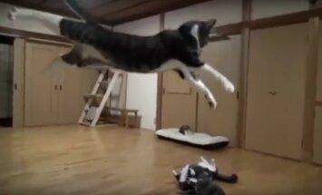 Äpardustest kubisev VIDEO: mis juhtub, kui kassidel kõik untsu läheb
