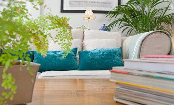 Miks kaunistada oma kodu päris taimedega?