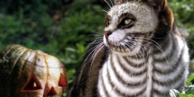 FOTOD: Kas oled <em>halloweeniks</em> valmis? 9 silmapaistvat ja humoorikat kostüümi oma lemmikule