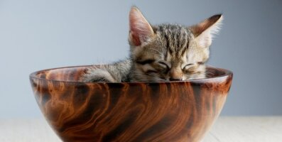 Miks meeldivad kassidele väga kitsad kohad?