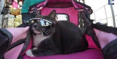VIDEO: Haruldase konditsiooniga südamlik kass, kes kannab igapäevaselt päikseprille