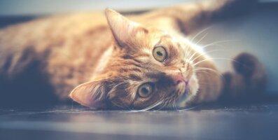 Spetsialist selgitab: Uue teooria kohaselt arvab sinu kass, et ka sina oled hiiglaslik kass, kellega eluaset jagada