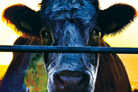 TOIDUFILMI SOOVITUS: Film probleemidest, mida keskkonnaorganisatsioonid ei taha meile näidata