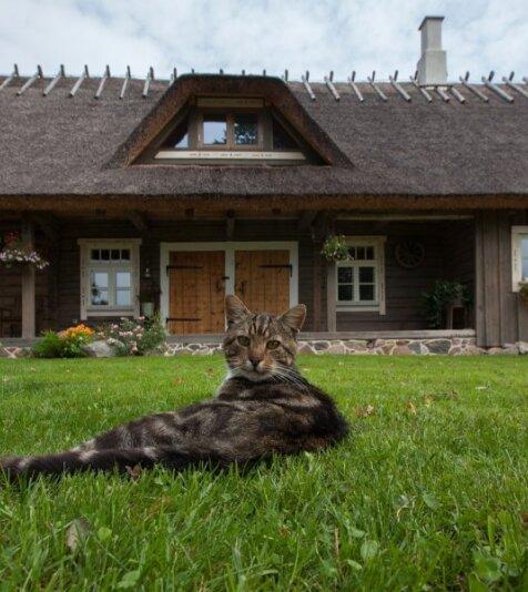 Vanast aidast ehitatudSoe pere maakoduTinnu talus Valgamaal.
