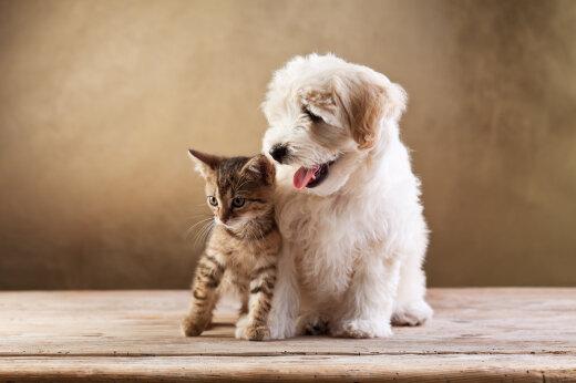 FOTO | See pilt paneb paika, kas oled kassi- või koerainimene