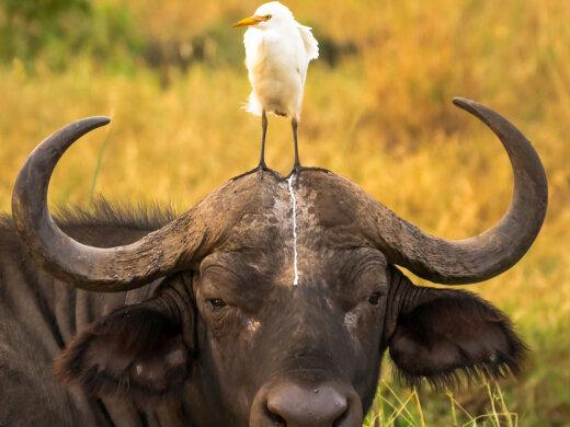 GALERII   Selle nädala kõige naljakamad loomafotod