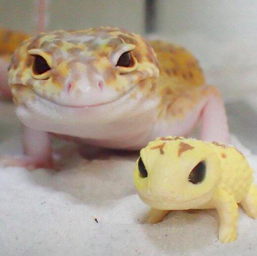 Nunnud FOTOD: Geko ei suuda naeratamist lõpetada, kui talle mängugekot tutvustatakse