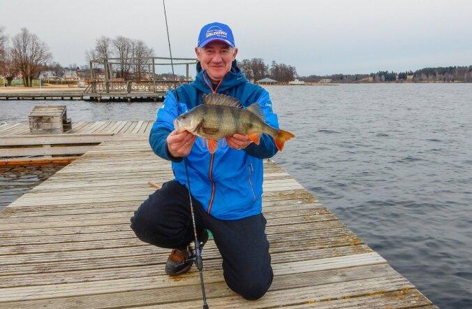 Ixa blogi: elu kala Viljandi järvest - ahven 1,37 kg