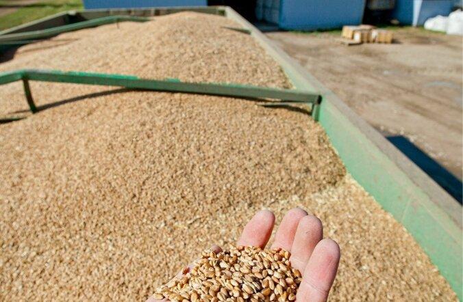 Saagi kvaliteet algab seemnest