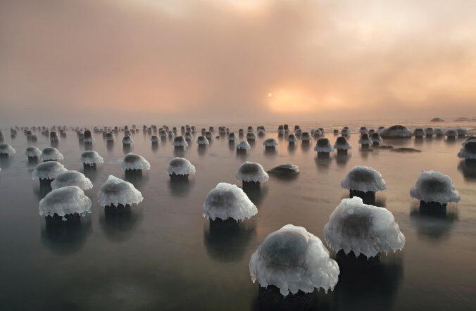 Lummav kaader: Eesti loodusfotograafi Tallinnas tehtud ülesvõte valiti National Geographicu rahvusvahelisse märtsinumbrisse