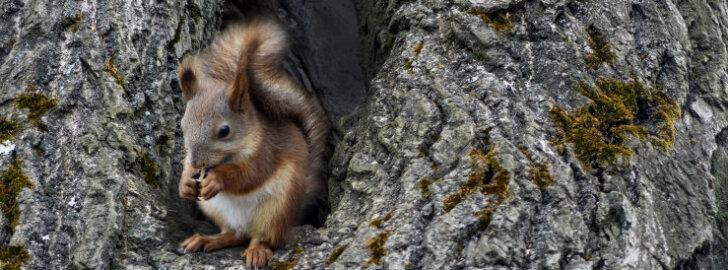 Kuidas täiendada oravate toidulauda?