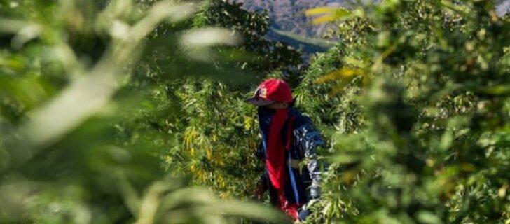 Марокко — наркотическая Мекка Северной Африки