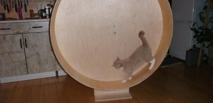 Meisterda tubasele kassile jooksuratas