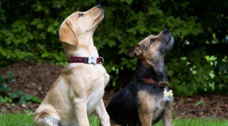 4 nippi: mida teha, kui koer aias kaevab