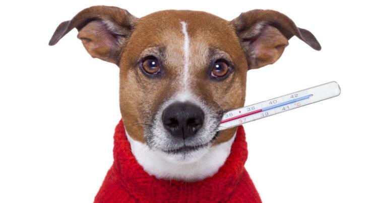 Haiguslaine kimbutab: Tartu Koduta Loomade Varjupaik otsib hädasti vabatahtlikke, kes haigestunud talitajaid asendada saaks