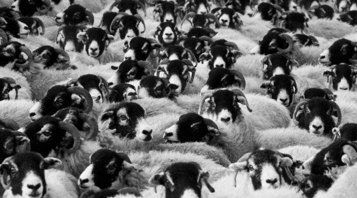 Vaata järgi: läbi aegade 10 kõige kummalisemat massisurma loomade hulgas