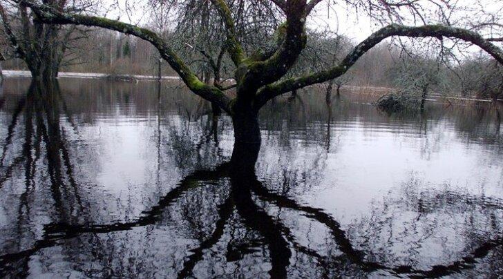 Vihmane detsember jätab taliviljad veesilmade meelevalda