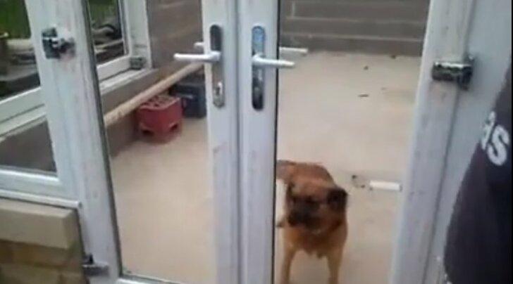 VIDEO: Nalja nabani! Kui koer on ära õppinud, et uksel käib klaas ees, siis ilmselgelt teistsugust varianti olla ei saa