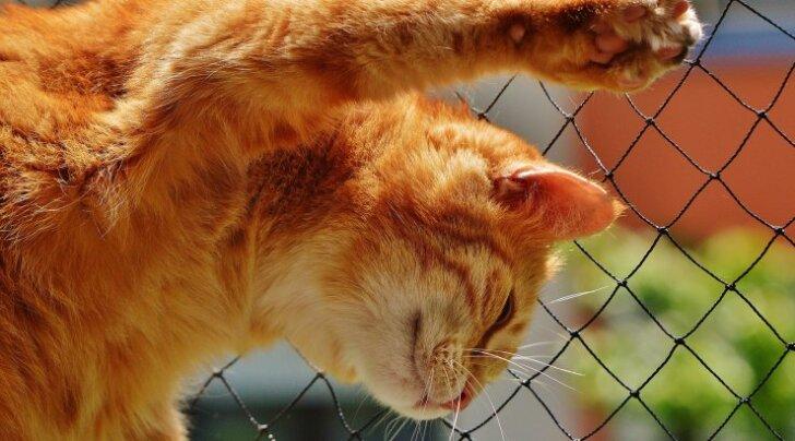 Kassi kehakeel: mida sinu kass sulle öelda püüab?