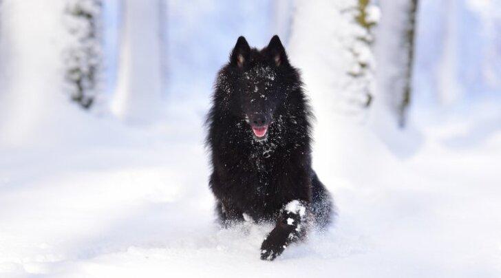 Iga loom on erinev: kui külm on sinu koera jaoks liiga külm?