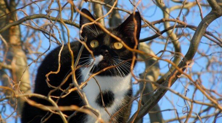 Viimsis aitas südamlik G4S turvatöötaja kaduma läinud kassi tagasi koju
