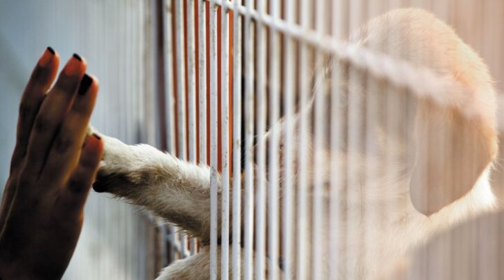 9 levinud müüti: mida kujutavad endast loomade varjupaigad tegelikult?