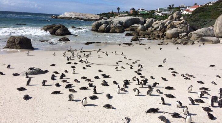 PULMAREIS LAV-is | Hea Lootuse neemel. Pettuma ei pea, sest rand on pingviinidest must!