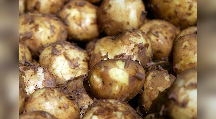 Kuidas kartuleid õigesti keeta