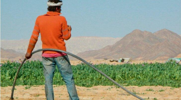 Oopiumipõllud ehk revolutsioon Siinai kõrbes