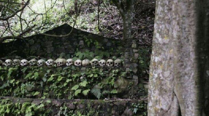 Волшебное дерево на Бали, устраняющее запах мертвечины