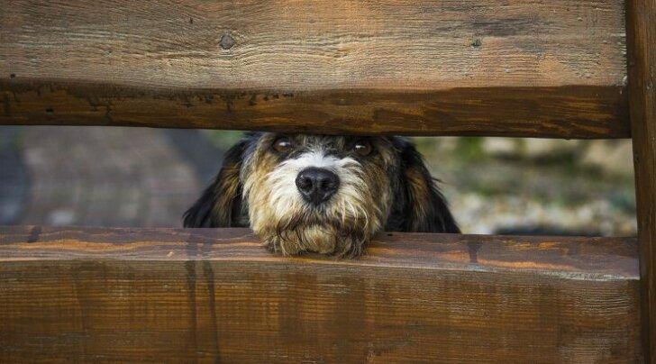 3 PÕHJUST: Miks koerad ära kaovad?