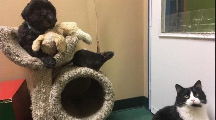 Imeline kolmik: varjupaika toodud koer, kass ja rott ei suuda üksteisest lahus olla