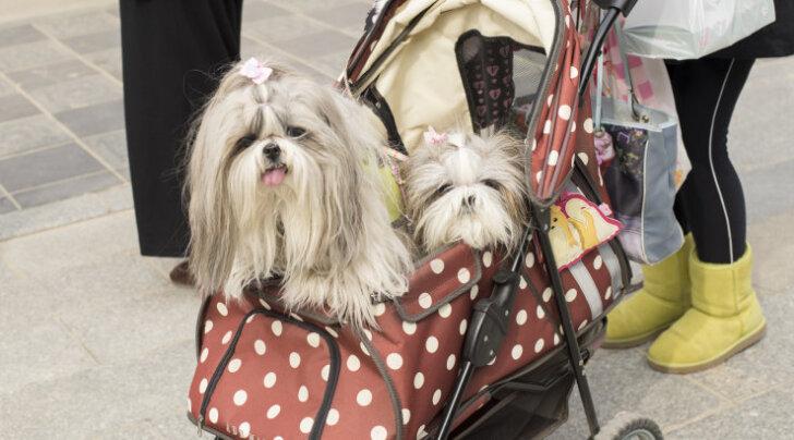 FOTOD: Sinna koerad reisiksid! Vaata, kuidas jaapanlased oma lemmikuid poputavad!